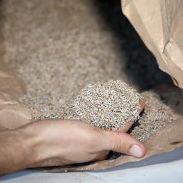 semences bio laitue grenobloise
