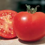 semences de tomate precoce bio