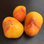 semence de tomate orange bio