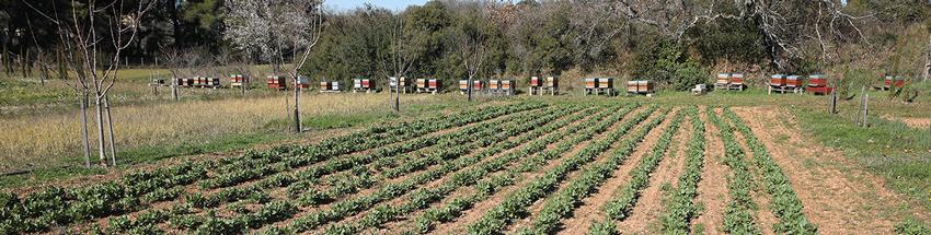 ruche - abeille - ferme semencière
