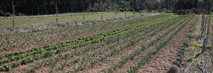 culture bio - ferme semencière