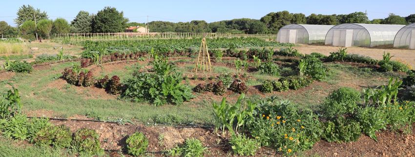 ferme semenciere bio - permaculture