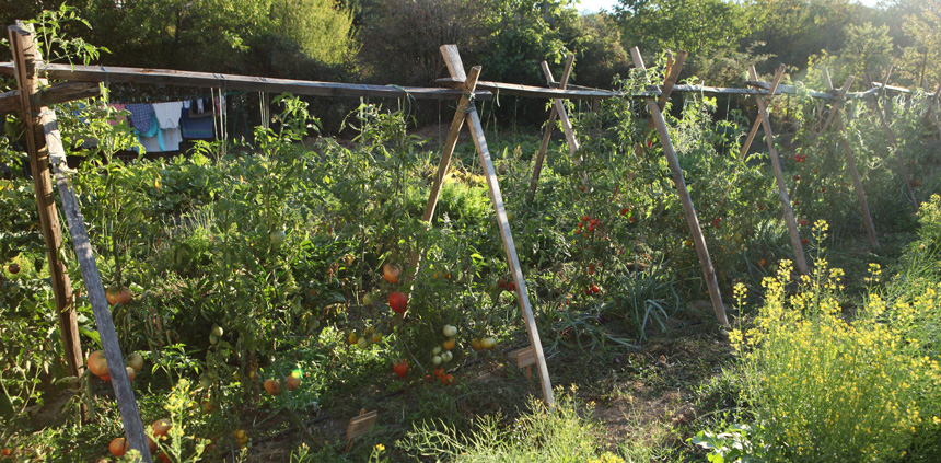 potager bio - permaculture