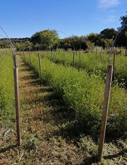 ferme semenciere bio - persil