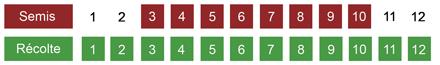 calendrier semis laitue bio