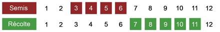 calendrier semis panais bio