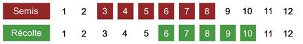 calendrier semis rhubarbe bio