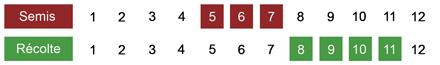 calendrier semis rutabaga bio