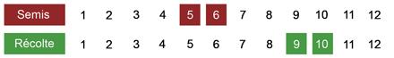 calendrier semis brocoli bio