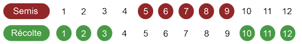calendrier semis chicorée rouge bio
