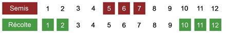 calendrier semis chou kale bio