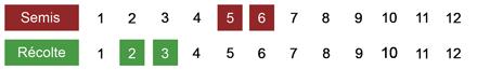 calendrier semis chou de Milanbio