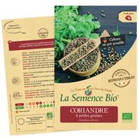 graines coriandre bio - LA semence bio