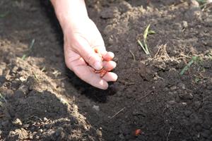 main semis - La semence bio